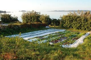 Salad – it's what we do best